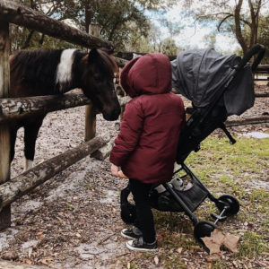 bitsy stroller with horse
